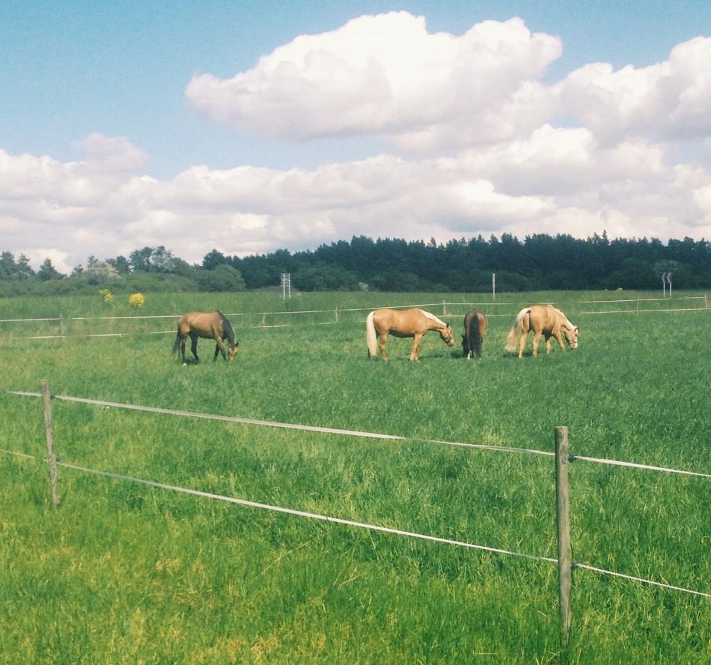 Sockerrikt gräs bidrar till vätskeansamlingar
