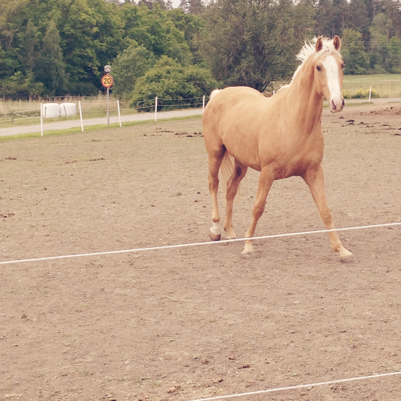 spruckna hovar häst