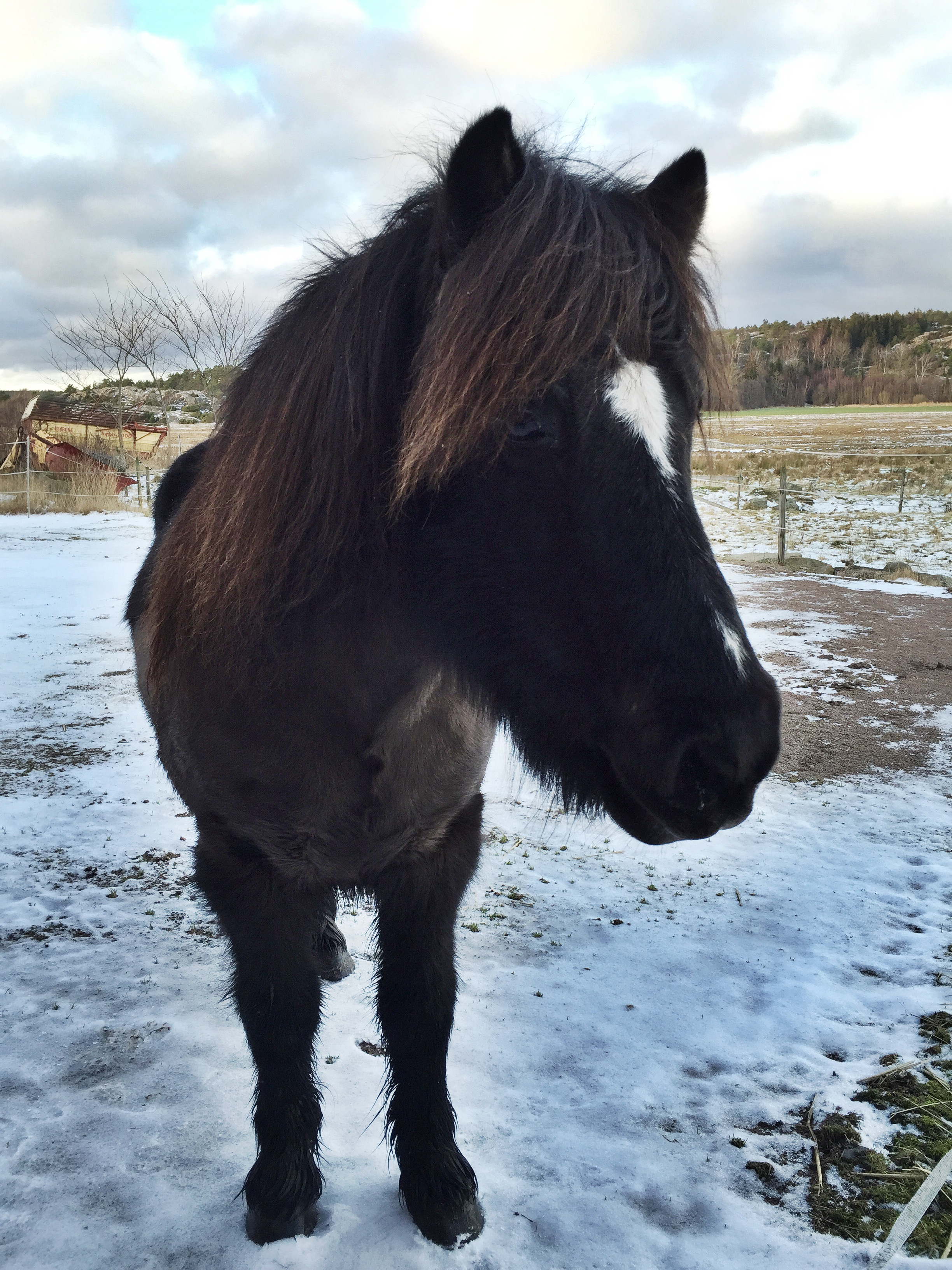 gallor häst behandling