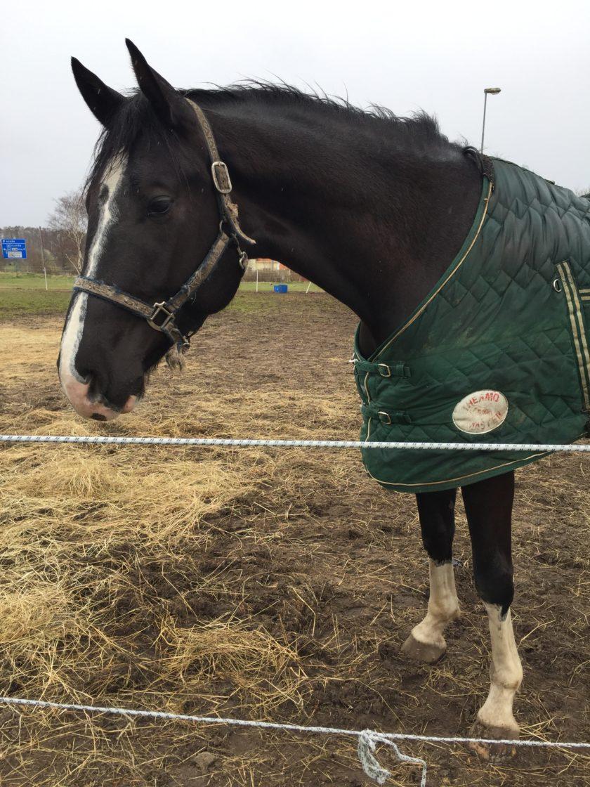 förebygga fång på häst